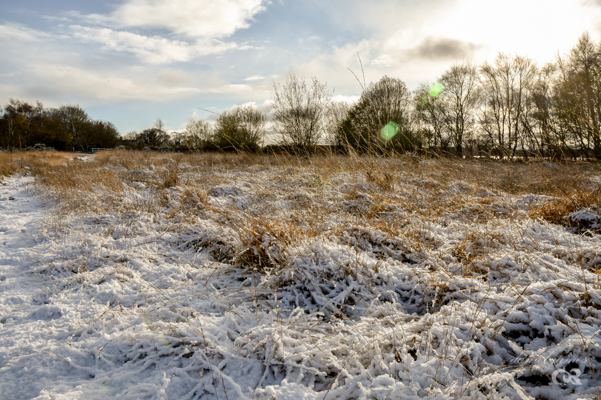 Chasewater Snowfall, 8th December 2017