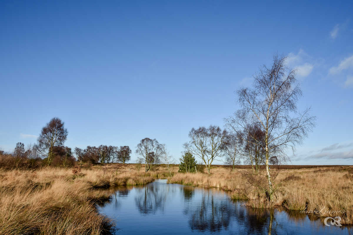 New Years Day Walk 2018 – Cannock Chase